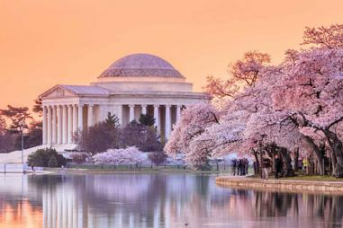 jefferson-memorial-cherry-blossom-festival-660x350.jpg